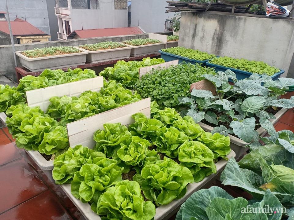 Chi 6 triệu đồng, anh bộ đội phủ kín rau quả sạch trên sân thượng 35m² ở Hà Nội phục vụ gia đình-5