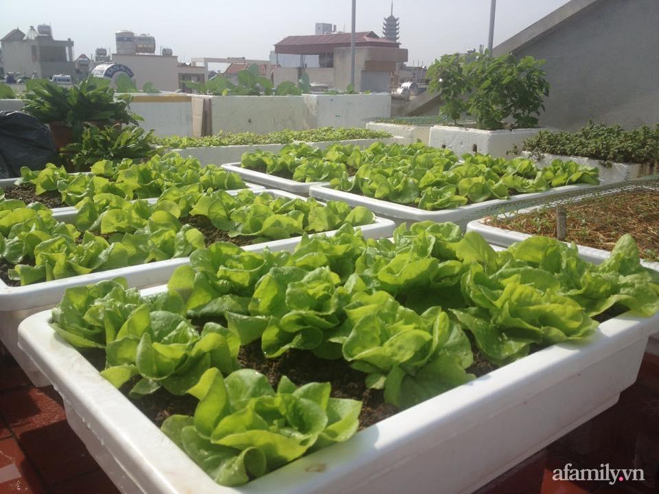 Chi 6 triệu đồng, anh bộ đội phủ kín rau quả sạch trên sân thượng 35m² ở Hà Nội phục vụ gia đình-14