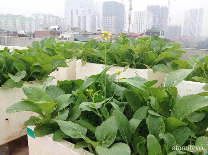 Chi 6 triệu đồng, anh bộ đội phủ kín rau quả sạch trên sân thượng 35m² ở Hà Nội phục vụ gia đình-21