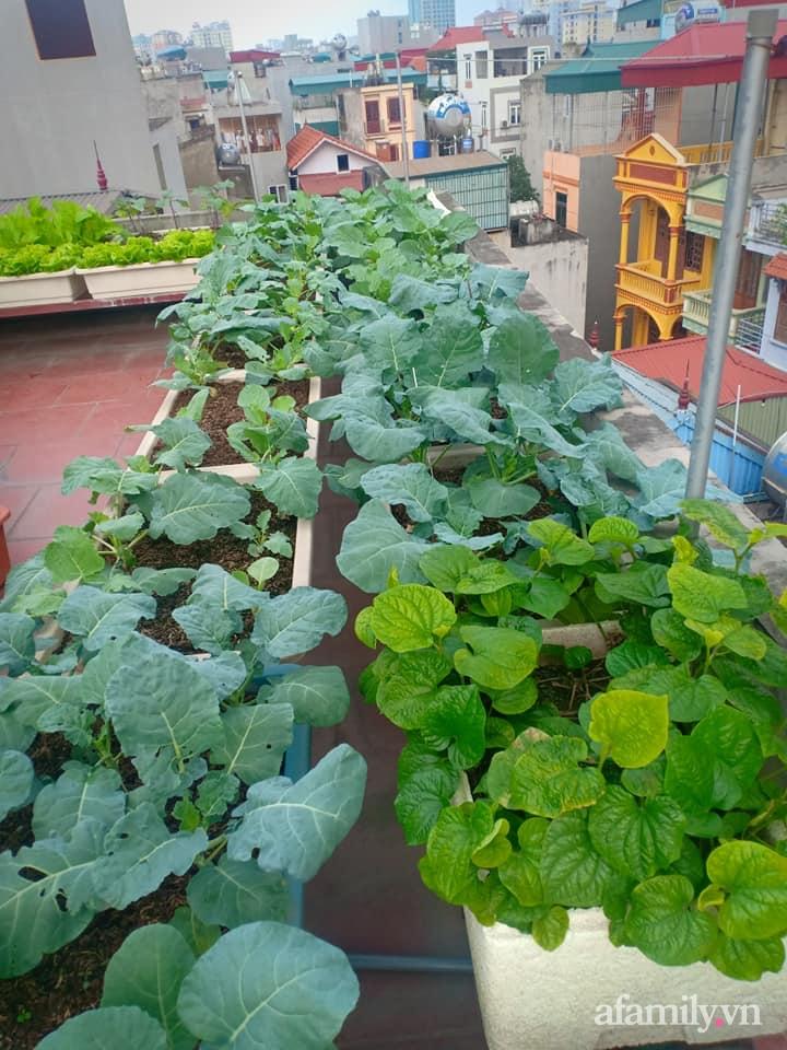 Chi 6 triệu đồng, anh bộ đội phủ kín rau quả sạch trên sân thượng 35m² ở Hà Nội phục vụ gia đình-26