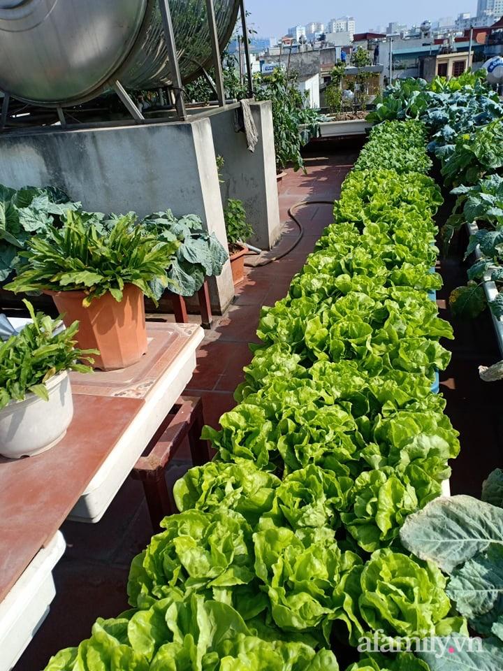 Chi 6 triệu đồng, anh bộ đội phủ kín rau quả sạch trên sân thượng 35m² ở Hà Nội phục vụ gia đình-29