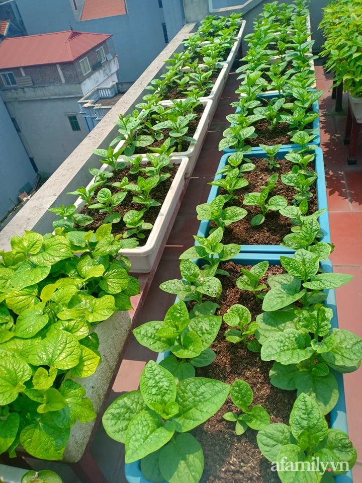Chi 6 triệu đồng, anh bộ đội phủ kín rau quả sạch trên sân thượng 35m² ở Hà Nội phục vụ gia đình-30