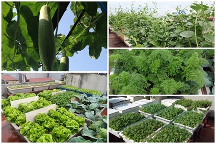 Chi 6 triệu đồng, anh bộ đội phủ kín rau quả sạch trên sân thượng 35m² ở Hà Nội phục vụ gia đình