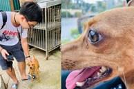 Chú chó rưng rưng nước mắt khi gặp lại chủ sau 1 tuần bị trộm bắt đi