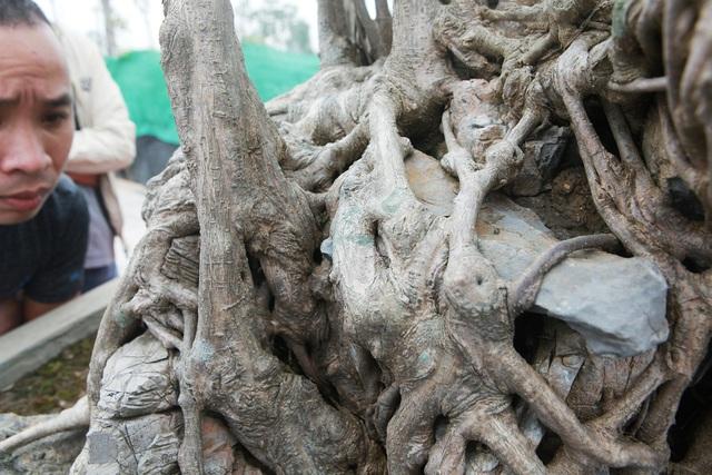 Chiêm ngưỡng sanh cổ Kỳ duyên mộc thạch có giá 5 tỷ đồng-5