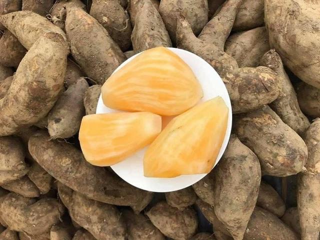 Hà Nội: Chị em mê tít đặc sản Lào Cai giá rẻ như khoai-4