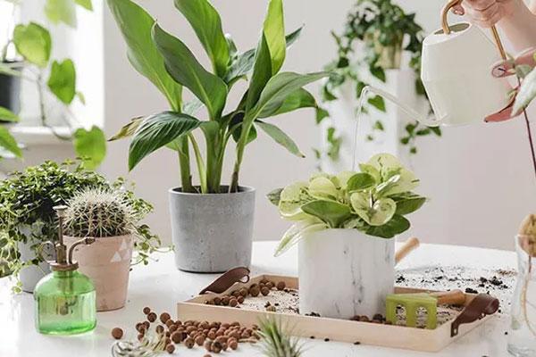 Sai lầm phổ biến khi trồng cây xanh trong nhà khiến cây bị úng, chết khô-1