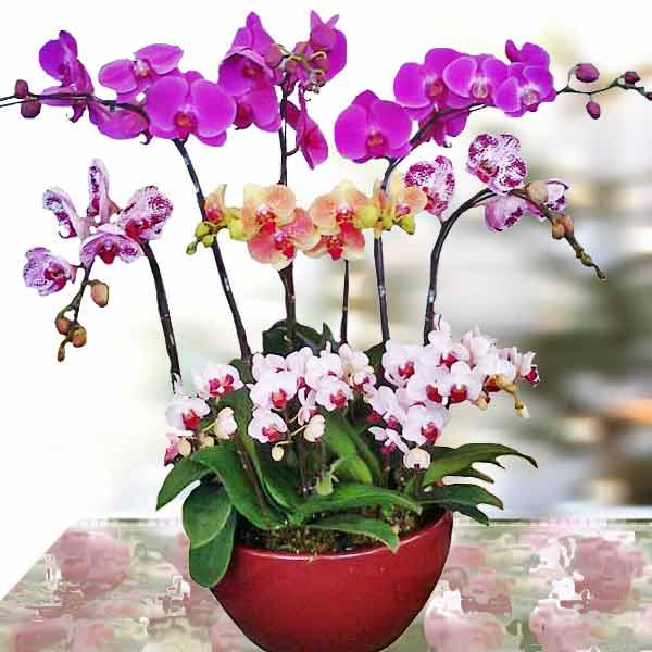 Mách bạn cách chọn và cắm hoa chào mừng ngày Nhà giáo Việt Nam 20/11 thật trang trọng, ý nghĩa-7