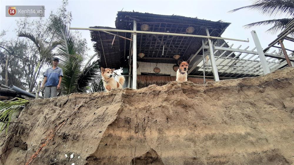 Người dân Hội An thẫn thờ nhìn bờ biển Cửa Đại, An Bàng tan hoang, hàng loạt căn nhà bị sóng biển nuốt chửng-11