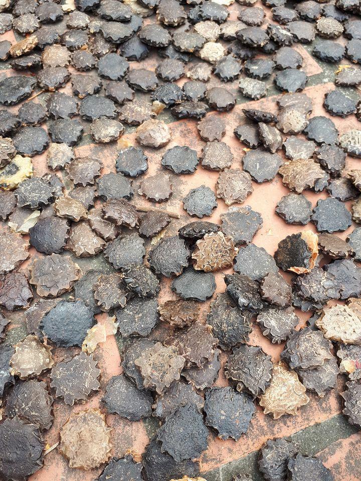 Loại hạt bỏ đi được coi là phế phẩm lại đang được nhiều người lùng mua với giá 130 ngàn/kg-1