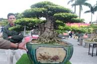 Ngắm cây cảnh mai chiếu thủy tiền tỷ khiến giới chơi cây trầm trồ