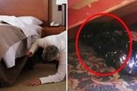 Mới tậu nhà mới, người đàn ông vội đến dọn dẹp rồi hối hận không kịp khi phát hiện thứ tỏa mùi nồng nặc dưới gầm giường