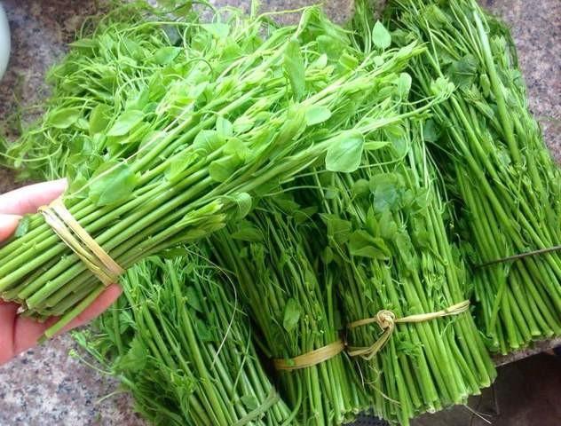 Làm giàu từ loại rau có mùi khai, giá lên đến 70.000 đồng/bó-1