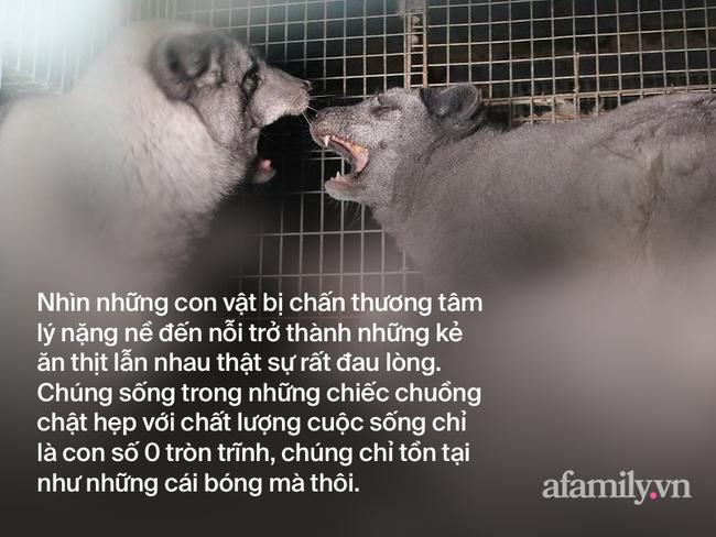 Bên trong trang trại lông thú nơi những loài vật xinh đẹp trở nên điên loạn, tấn công và ăn thịt nhau, chờ đến ngày đượcchết để phục vụ nhu cầu con người-4