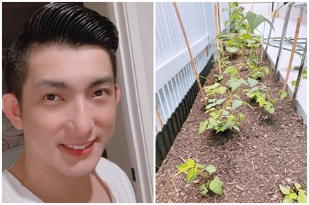 Ngoài chăm con, Bảo Duy - chồng cũ Phi Thanh Vân còn tự trồng được vườn rau xanh mướt ở Úc