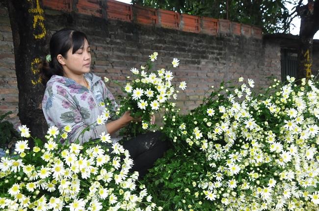 Loài từng là hoa dại ven đường thành đặc sản Hà Nội, nông dân cắt không kịp bán-11