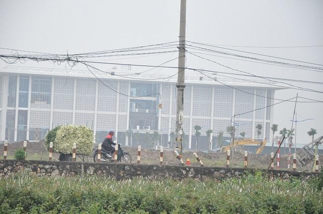 Loài từng là hoa dại ven đường thành đặc sản Hà Nội, nông dân cắt không kịp bán-13