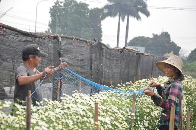 Loài từng là hoa dại ven đường thành đặc sản Hà Nội, nông dân cắt không kịp bán-5