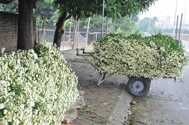Loài từng là hoa dại ven đường thành đặc sản Hà Nội, nông dân cắt không kịp bán-7