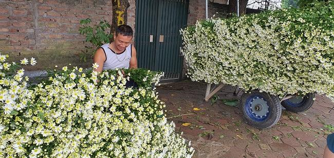 Loài từng là hoa dại ven đường thành đặc sản Hà Nội, nông dân cắt không kịp bán-9