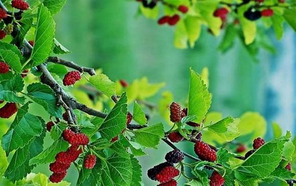 Muốn tránh xa xui xẻo nhất định xung quanh nhà không được trồng những loại cây này-2