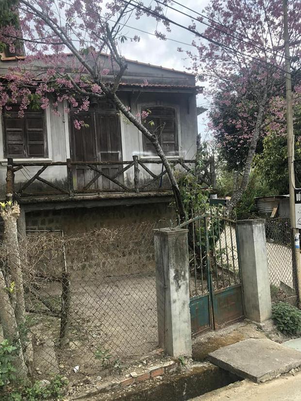 Chỉ vì thích 1 cây anh đào trước cổng ở Đà Lạt, chàng trai mua luôn cả căn nhà cũ và cải tạo thành nơi cực đáng sống-1