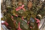 Chầu nhậu toàn hàng Tàu: 6.000 túi chân gà, gần 1.000 lon bia Trung Quốc-3
