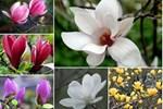 Bỏ 150 triệu buôn hoa Tết: 15 ngày xương máu, lỗ 50 triệu, gầy sụt 3kg-6