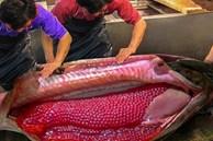 Cảnh lấy trứng cá hồi đạt gần 10 triệu lượt xem