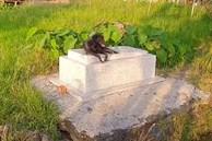 Cảm thương chú chó trung thành nằm canh mộ chủ suốt 3 năm ở Long An, mạnh thường quân góp tiền xây mái che cho mộ để chú chó có chỗ trú nắng, trú mưa