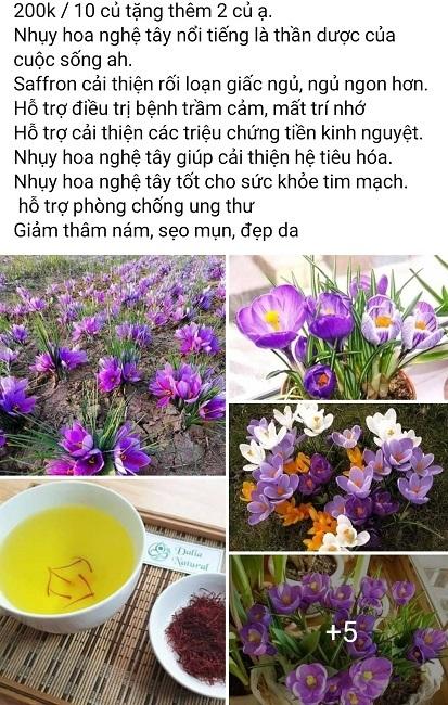 Củ giống của loại vàng đỏ đắt nhất thế giới được bán rẻ ở Việt Nam gây sốc-2