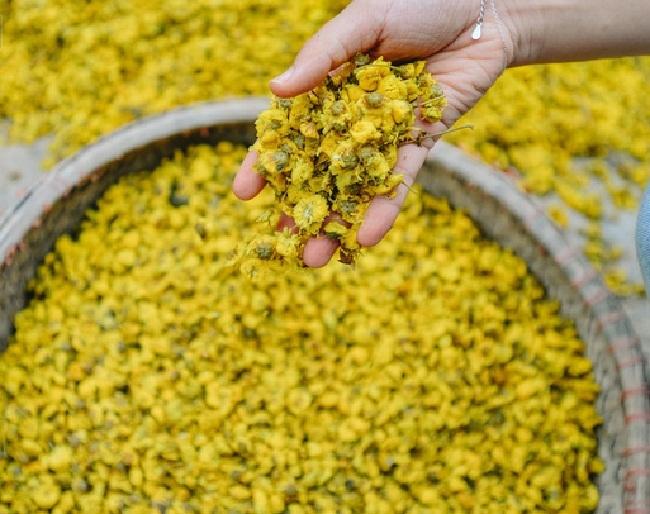 Bông hoa bé bằng cúc áo dùng làm thuốc, pha trà có giá bán tới 800.000 đồng/kg-6