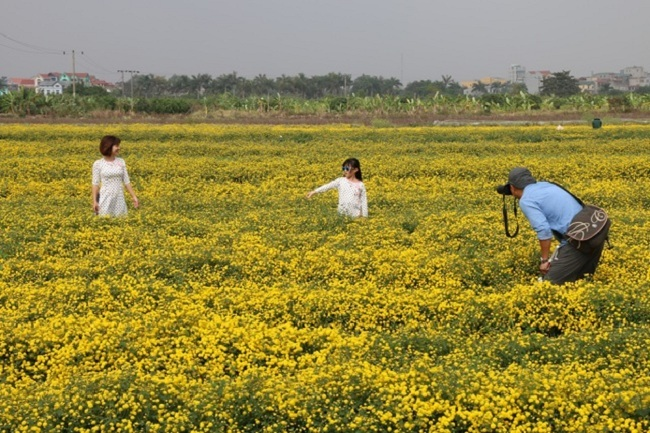 Bông hoa bé bằng cúc áo dùng làm thuốc, pha trà có giá bán tới 800.000 đồng/kg-9