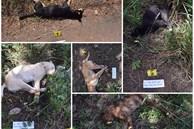 Truy tìm băng nhóm dùng ô tô Innova đi trộm chó