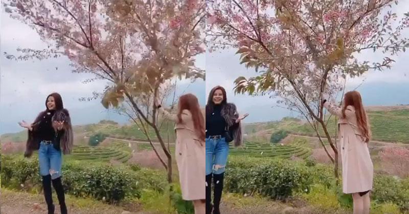 Bức xúc gái xinh rung cây để bạn tạo dáng hoa anh đào đang rơi, còn đăng clip lên mạng cười toe toét-3