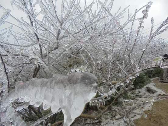Hà Nội liên tiếp đón không khí lạnh tăng cường, nền nhiệt xuống tới 12 độ C, miền núi Bắc Bộ xuất hiện băng giá-1