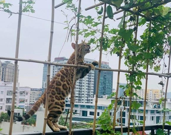 Khu vườn nhỏ xanh mướt, sai trĩu quả trên sân thượng của Ông hoàng nhạc đỏ Trọng Tấn-6