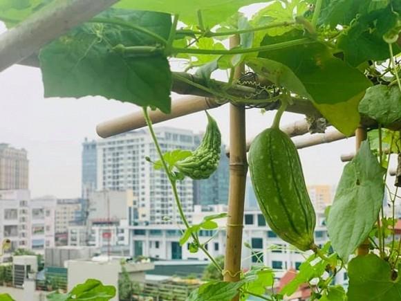 Khu vườn nhỏ xanh mướt, sai trĩu quả trên sân thượng của Ông hoàng nhạc đỏ Trọng Tấn-7