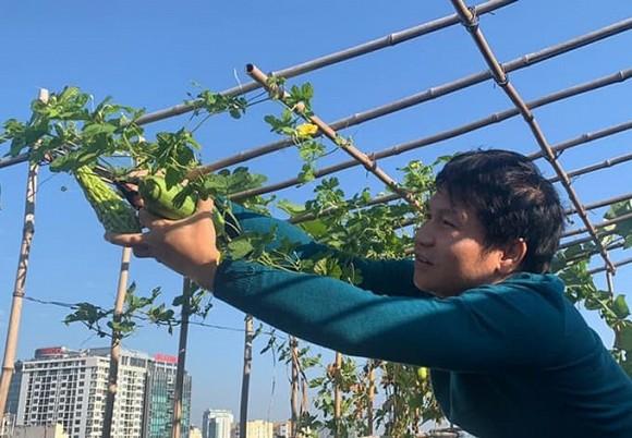 Khu vườn nhỏ xanh mướt, sai trĩu quả trên sân thượng của Ông hoàng nhạc đỏ Trọng Tấn-8