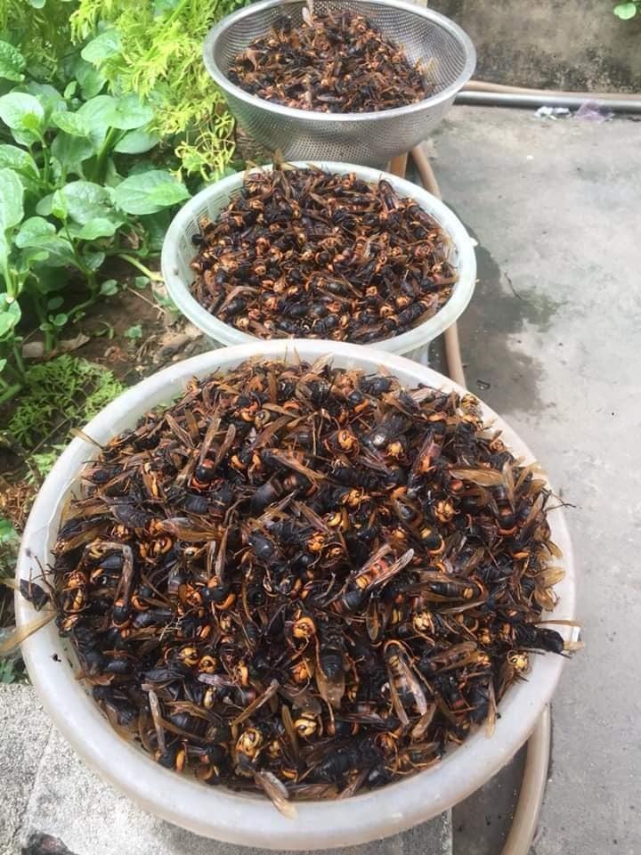 Giá tiền triệu vẫn lên rừng bê cả tổ ong vạn con về xào ăn, ngâm rượu bồi bổ-2