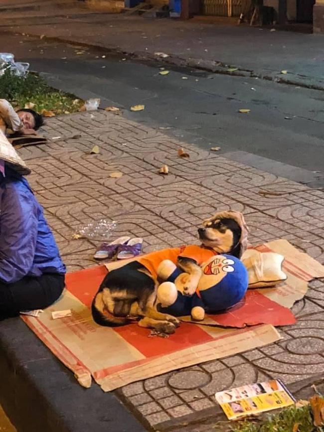 Chuyện đời tréo ngoe khi chú chó theo chủ đi mưu sinh nhưng lại nằm ôm gấu bông, trùm mũ ngủ rất an nhàn bất ngờ trở thành tâm điểm bàn tán trên mạng xã hội-1