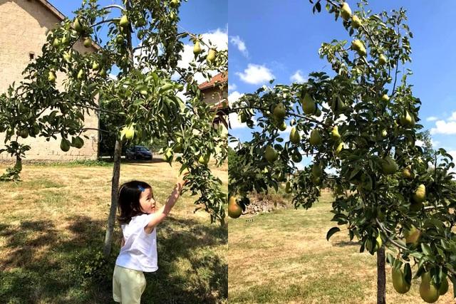 Trang trại trăm loại cây trái trĩu trịt quả của cặp vợ chồng Pháp - Việt-6