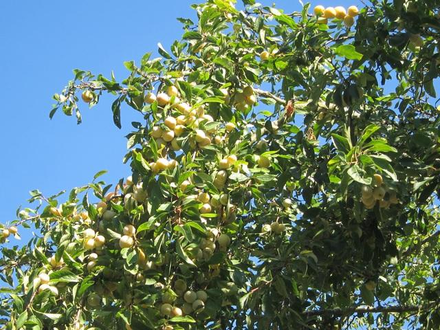 Trang trại trăm loại cây trái trĩu trịt quả của cặp vợ chồng Pháp - Việt-8