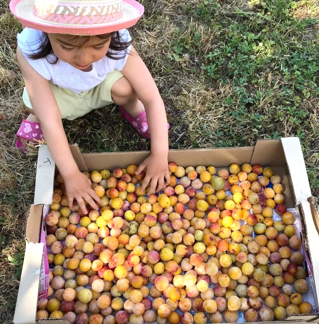 Trang trại trăm loại cây trái trĩu trịt quả của cặp vợ chồng Pháp - Việt-9
