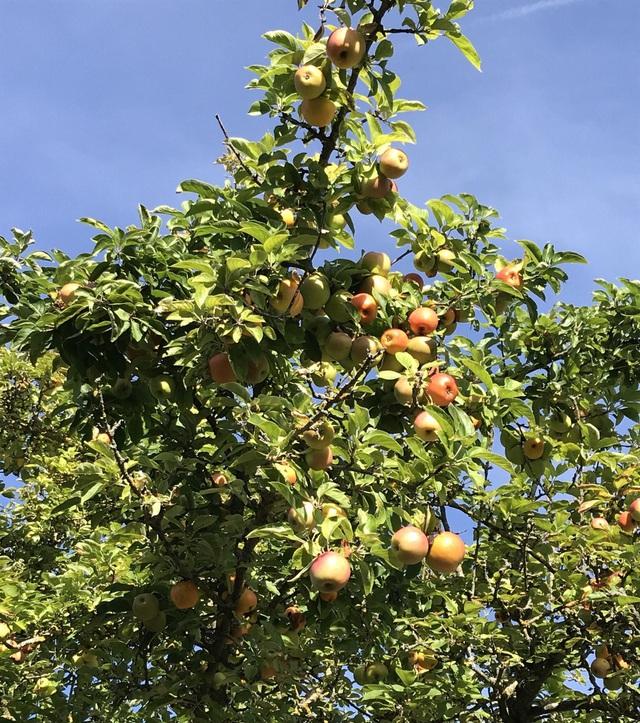 Trang trại trăm loại cây trái trĩu trịt quả của cặp vợ chồng Pháp - Việt-13