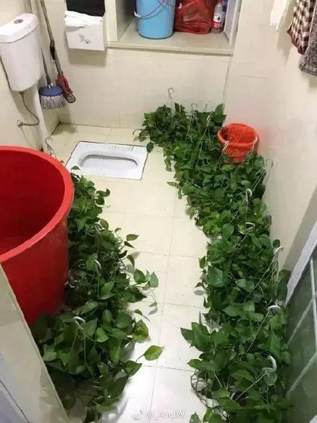 """Những thiết kế nhà vệ sinh đi vào lòng đất"""": Ngốc thật hay ngốc giả vờ vậy?-6"""