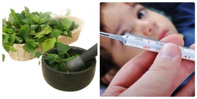 Thứ rau có mùi tanh mà nhiều người sợ hãi hóa ra lại là thuốc đặc trị giúp hạ sốt trong một nốt nhạc cho con bạn-1