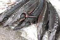 Tác hại khi ăn cá tầm nhập lậu từ Trung Quốc