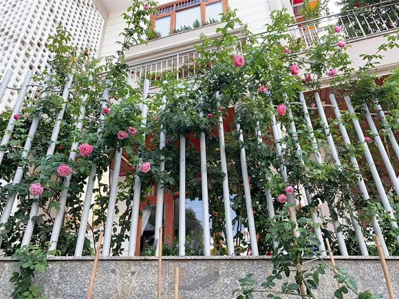 Biệt thự triệu đô sang xịn, ngập tràn hoa của diễn viên Quý Bình và bà xã doanh nhân-3