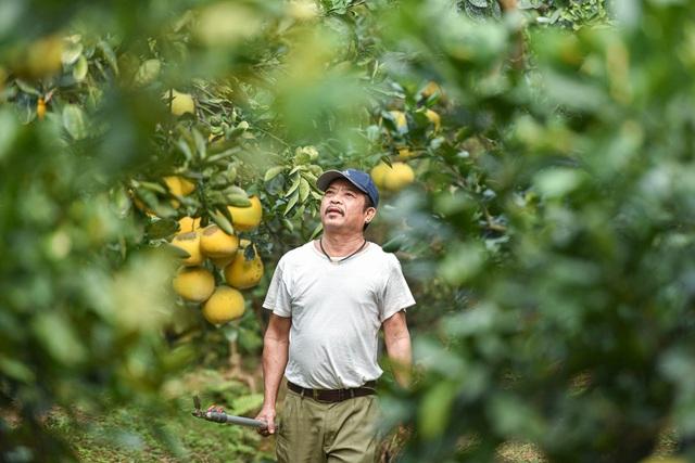 Mục sở thị vườn bưởi Diễn được mùa, kiếm gần 1 tỷ đồng mỗi năm-10